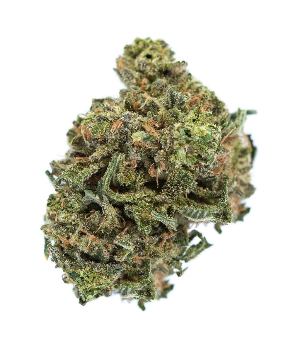 Hashplant (AA)