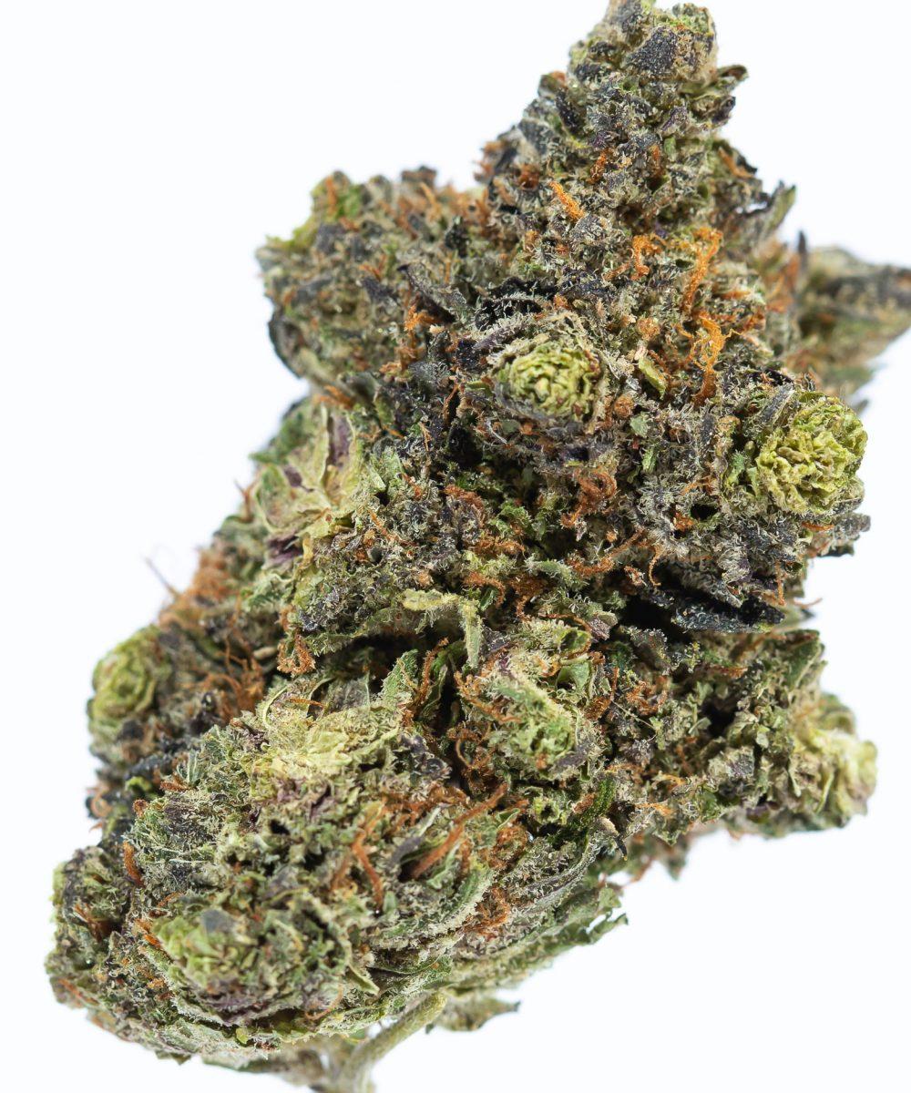Purple Urkle (AA)
