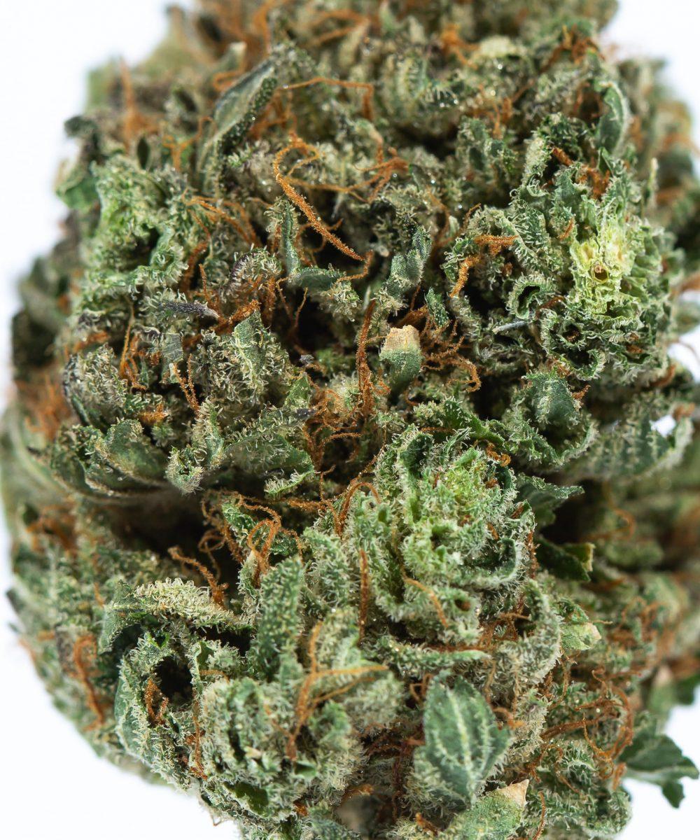 Purple Jack (AAA)